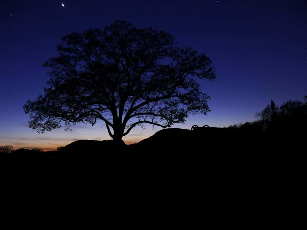 Gettysburg Battlefield - Witness Tree at Devils Den